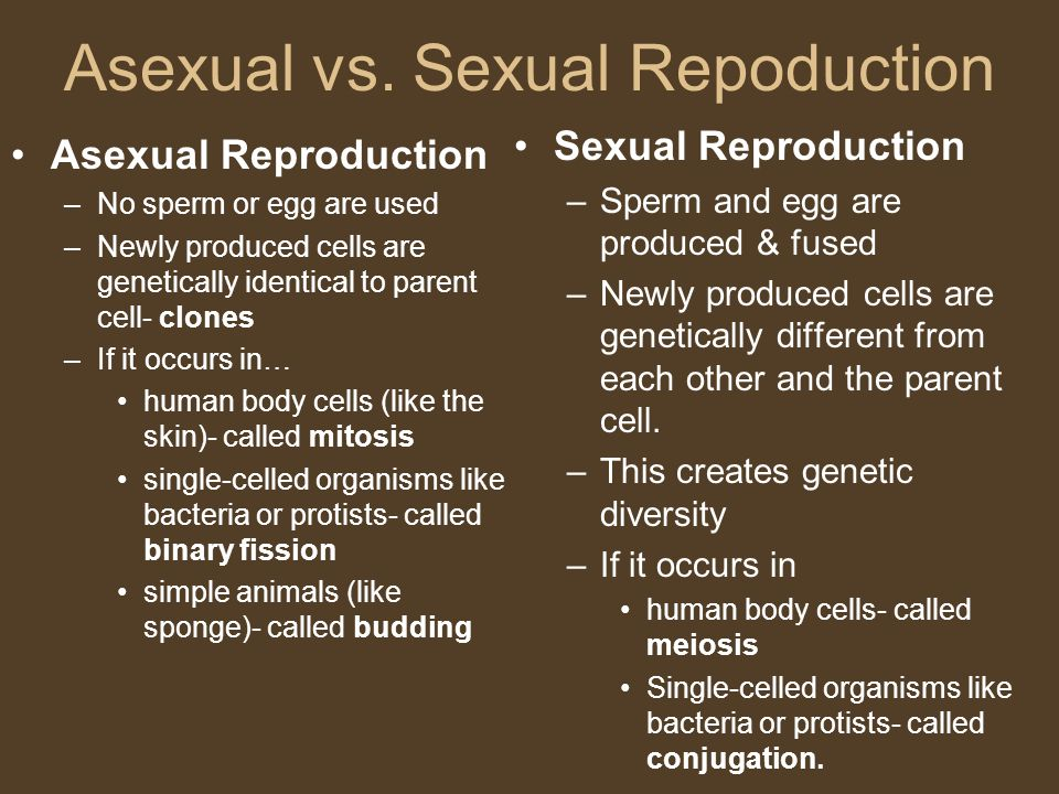 Asexual vs. Sexual Repoduction