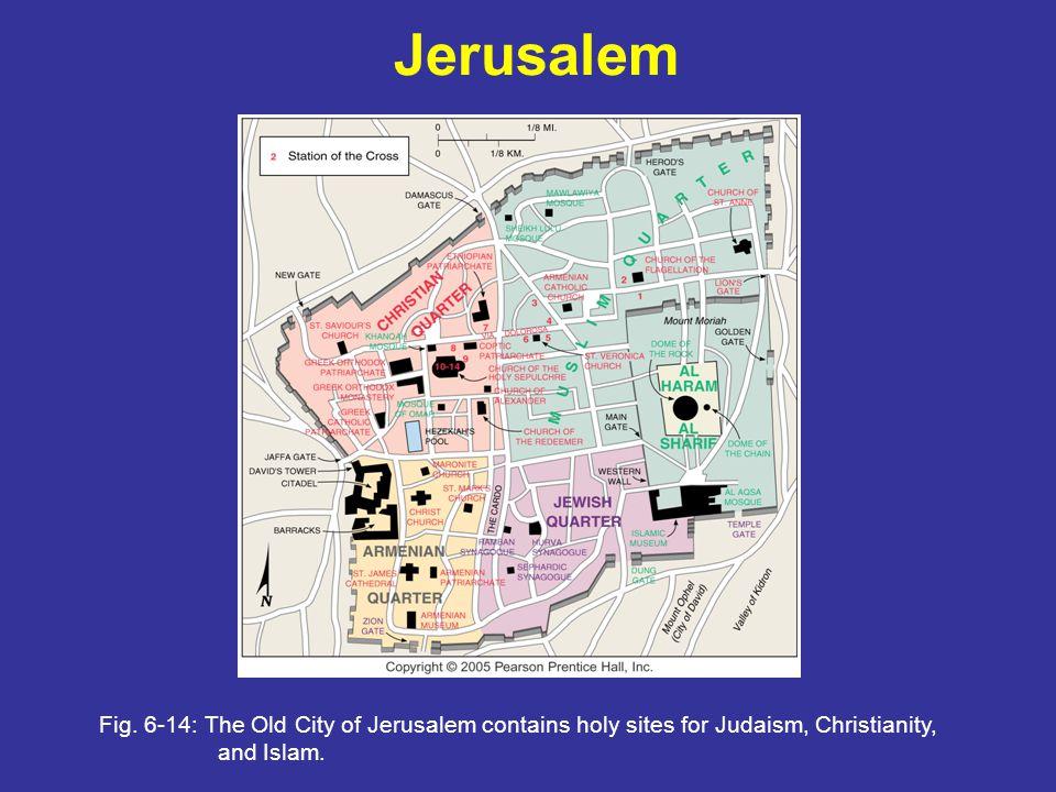 Jerusalem Fig.