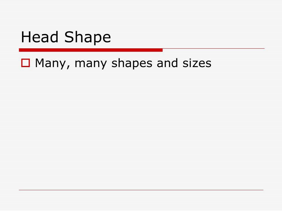 Head Shape Many, many shapes and sizes
