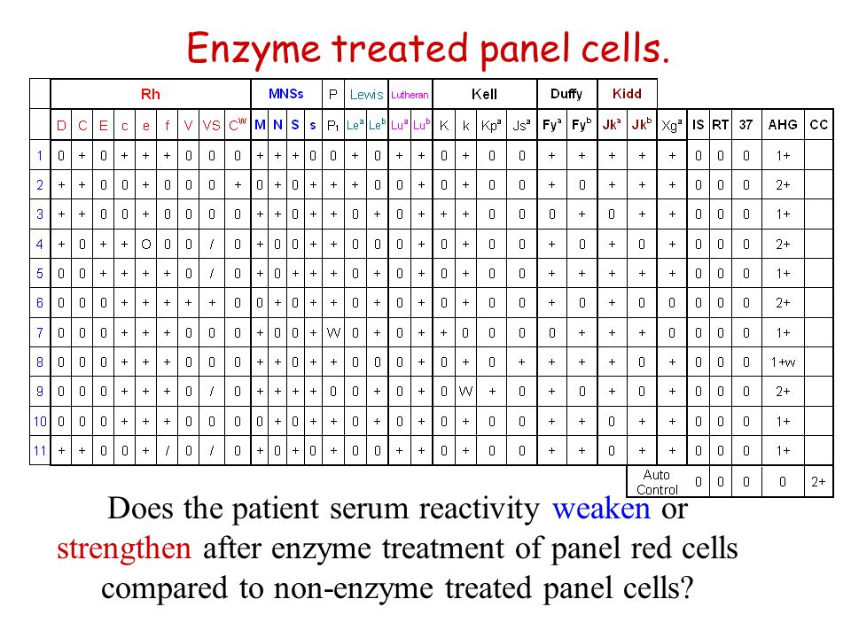 Enzyme treated panel cells.