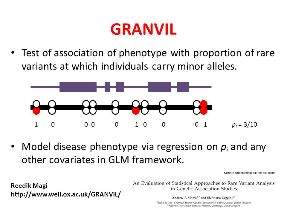 GRANVIL Test of association of phenotype with proportion of rare variants at which individuals carry minor alleles.