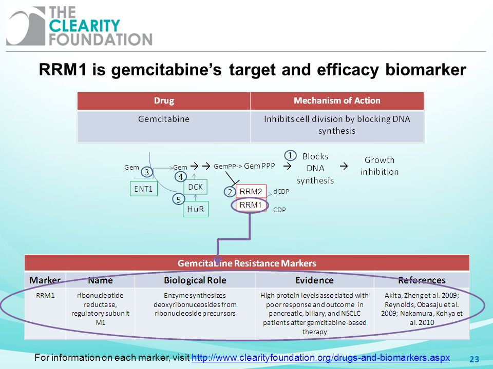RRM1 is gemcitabine's target and efficacy biomarker