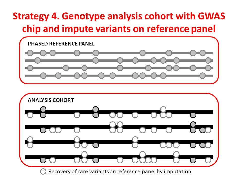 Strategy 4. Genotype analysis cohort with GWAS chip and impute variants on reference panel
