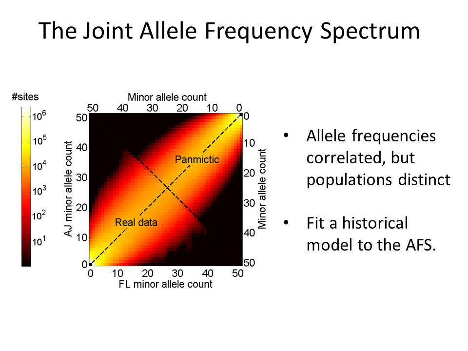 The Joint Allele Frequency Spectrum