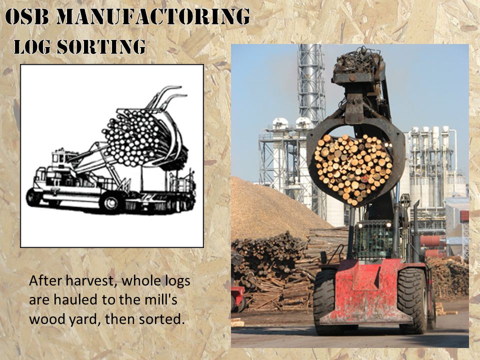 OSB MANUFACTORING Log Sorting