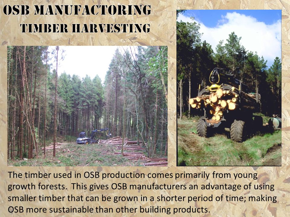 OSB MANUFACTORING Timber Harvesting