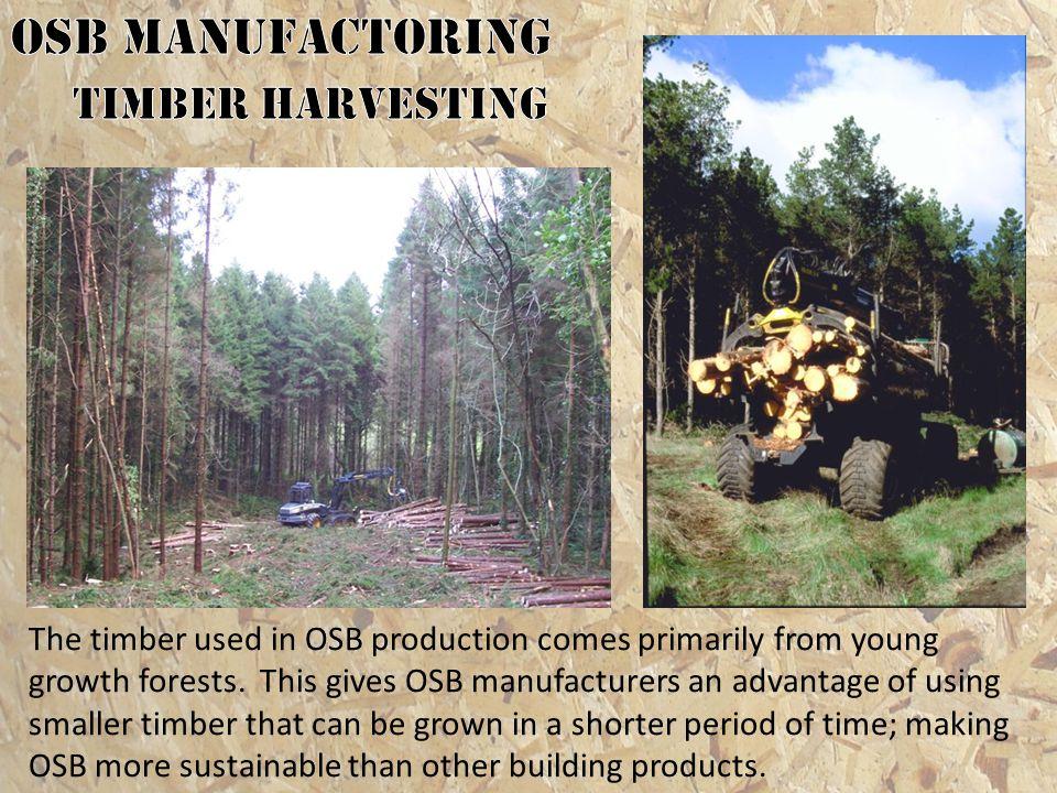 OSB MANUFACTORING Timber Harvesting