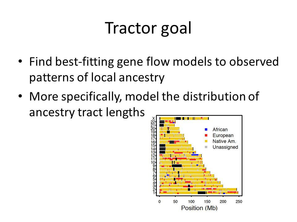 Tractor goal Find best-fitting gene flow models to observed patterns of local ancestry.