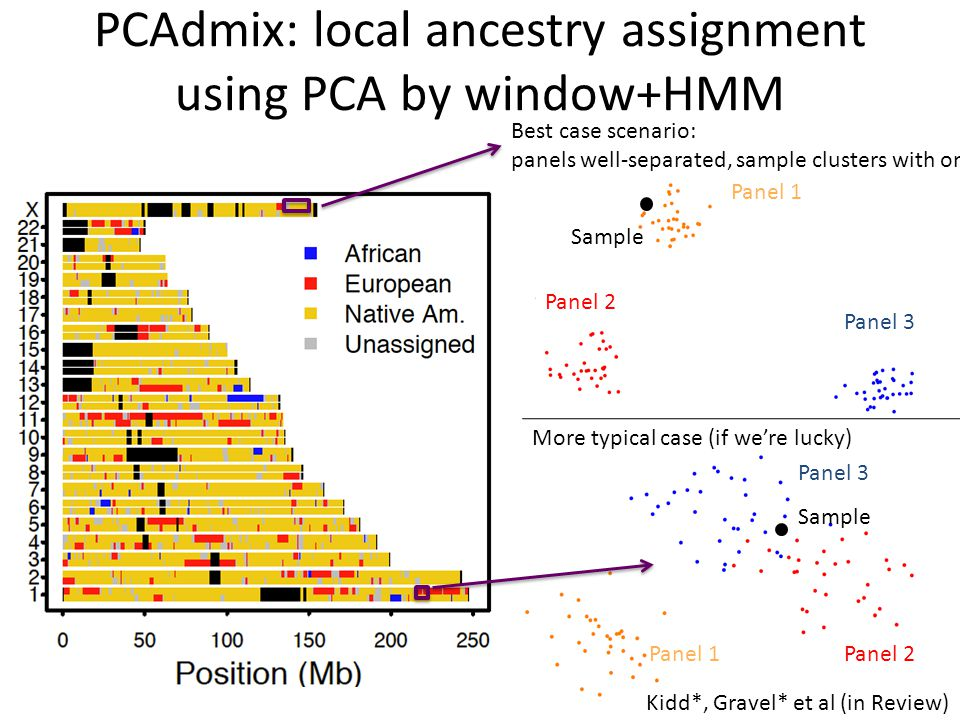 PCAdmix: local ancestry assignment using PCA by window+HMM
