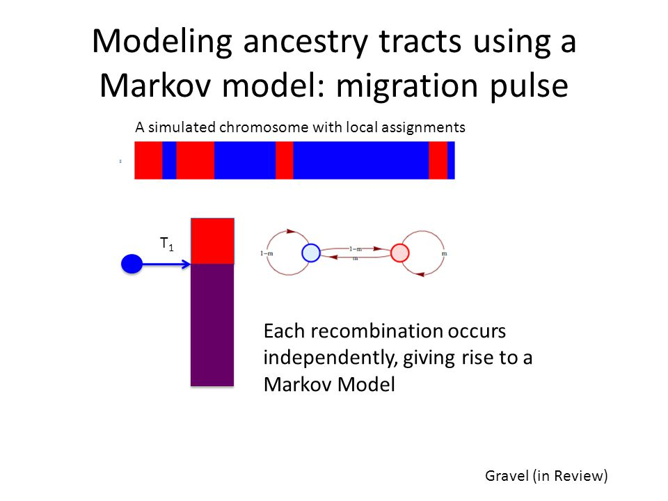 Modeling ancestry tracts using a Markov model: migration pulse