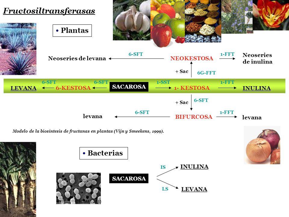 Fructosiltransferasas