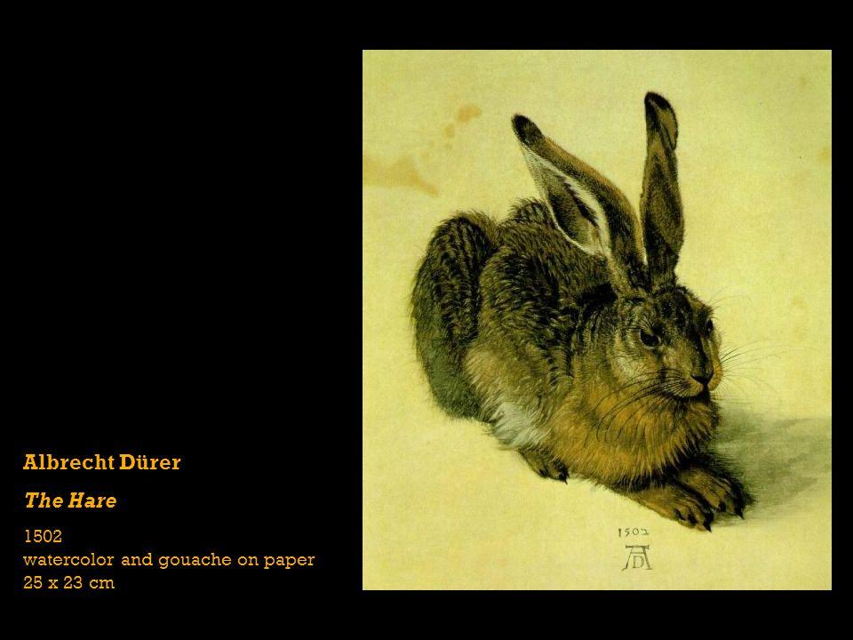 Albrecht Dürer The Hare