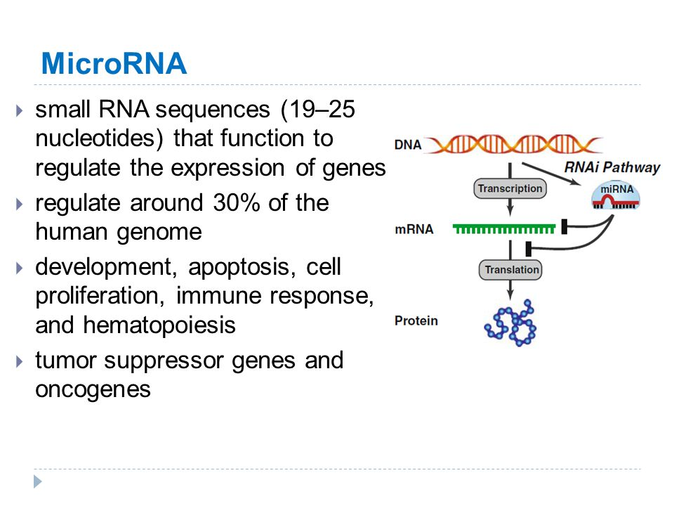 MicroRNA small RNA sequences (19–25 nucleotides) that function to regulate the expression of genes.