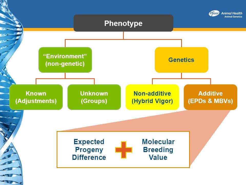 Environment (non-genetic) Non-additive (Hybrid Vigor)