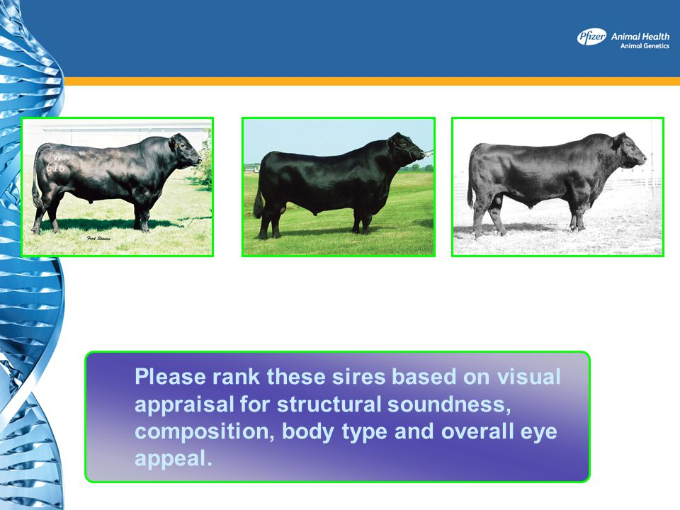Please rank these sires based on visual appraisal for structural soundness, composition, body type and overall eye appeal.