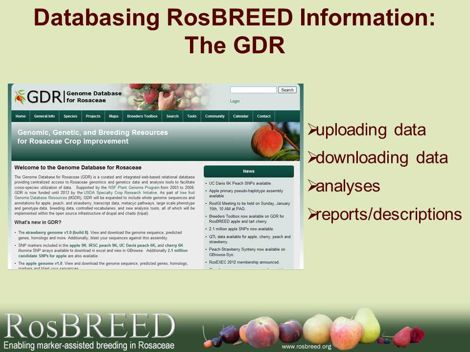 Databasing RosBREED Information: The GDR