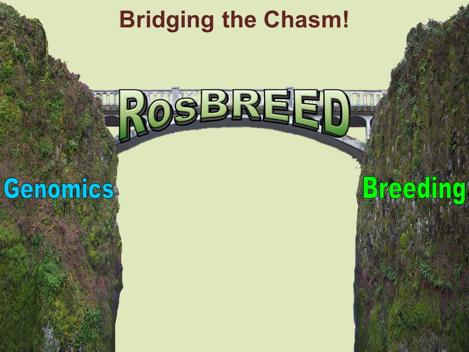 Bridging the Chasm! RosBREED Genomics Breeding