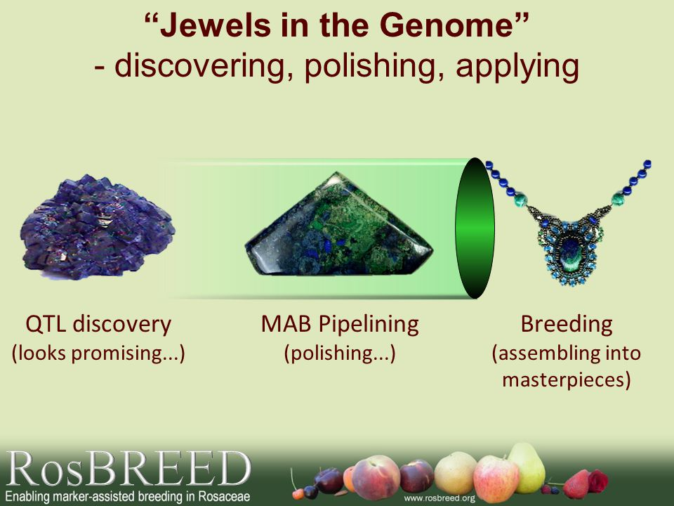 RosBREED Jewels in the Genome - discovering, polishing, applying