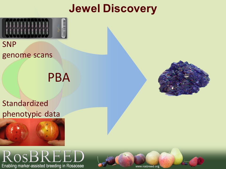 RosBREED PBA Jewel Discovery SNP genome scans