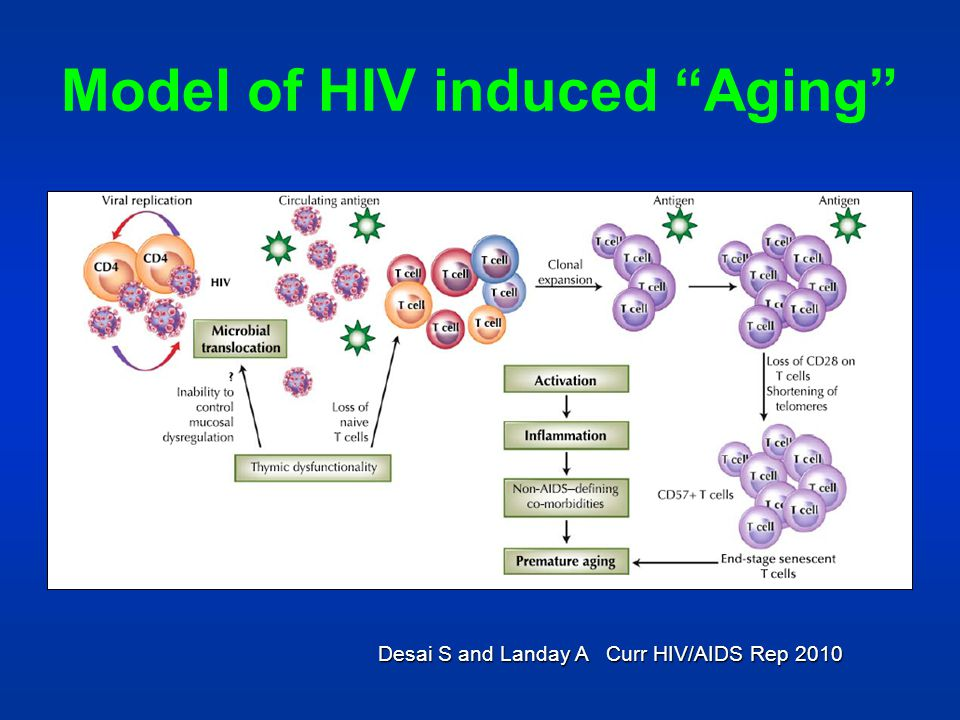 Model of HIV induced Aging