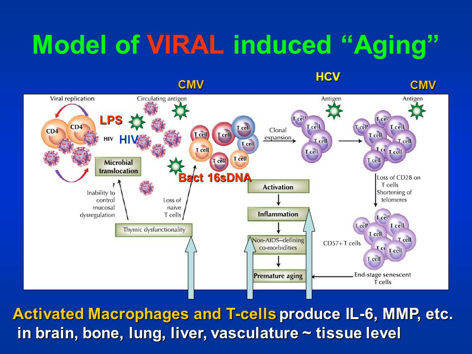 Model of VIRAL induced Aging