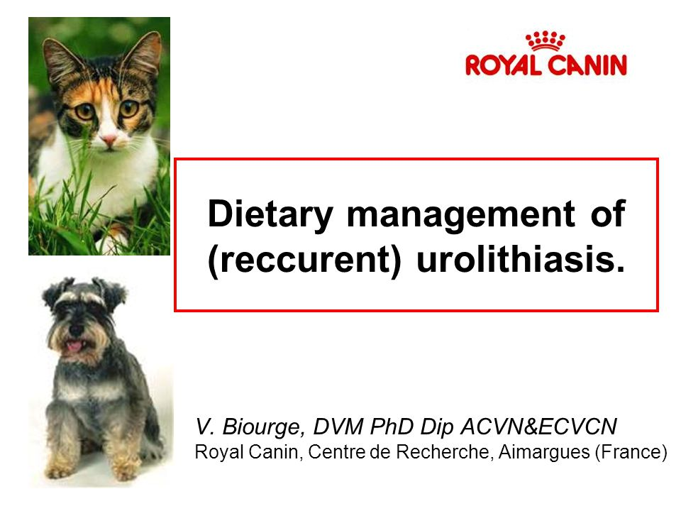 Dietary management of (reccurent) urolithiasis.
