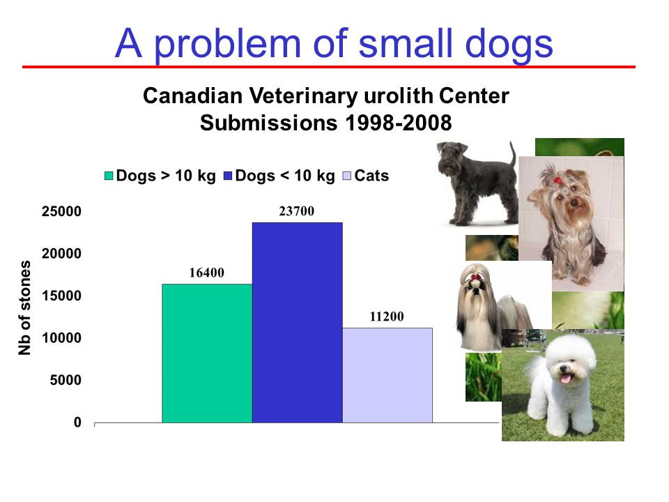 Canadian Veterinary urolith Center