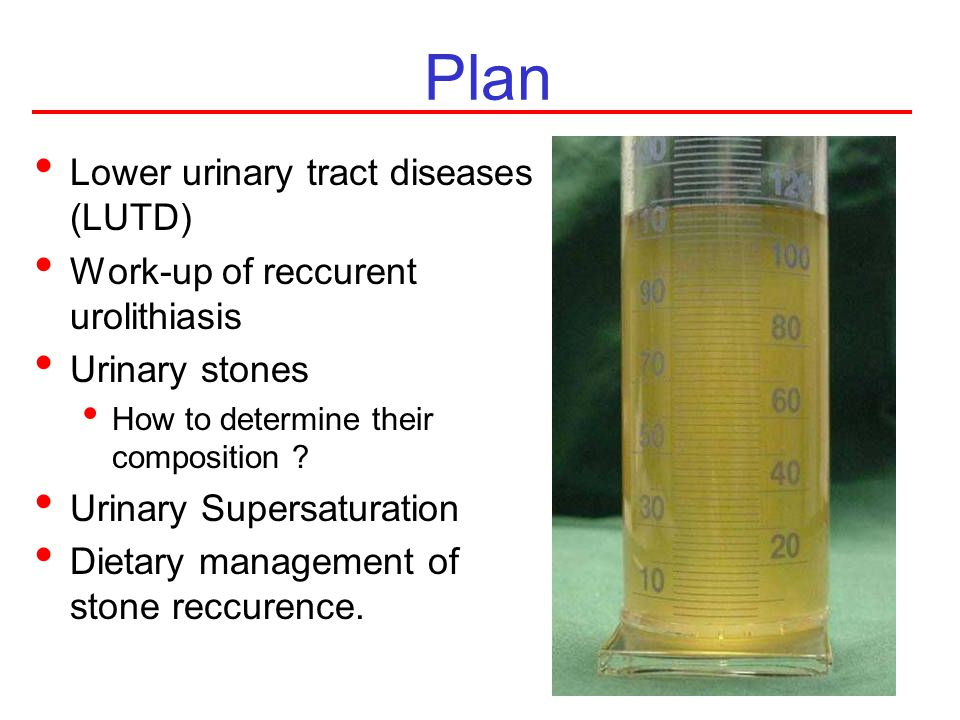 Plan Lower urinary tract diseases (LUTD)