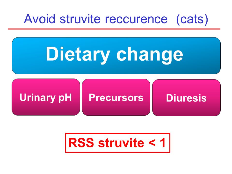 Avoid struvite reccurence (cats)