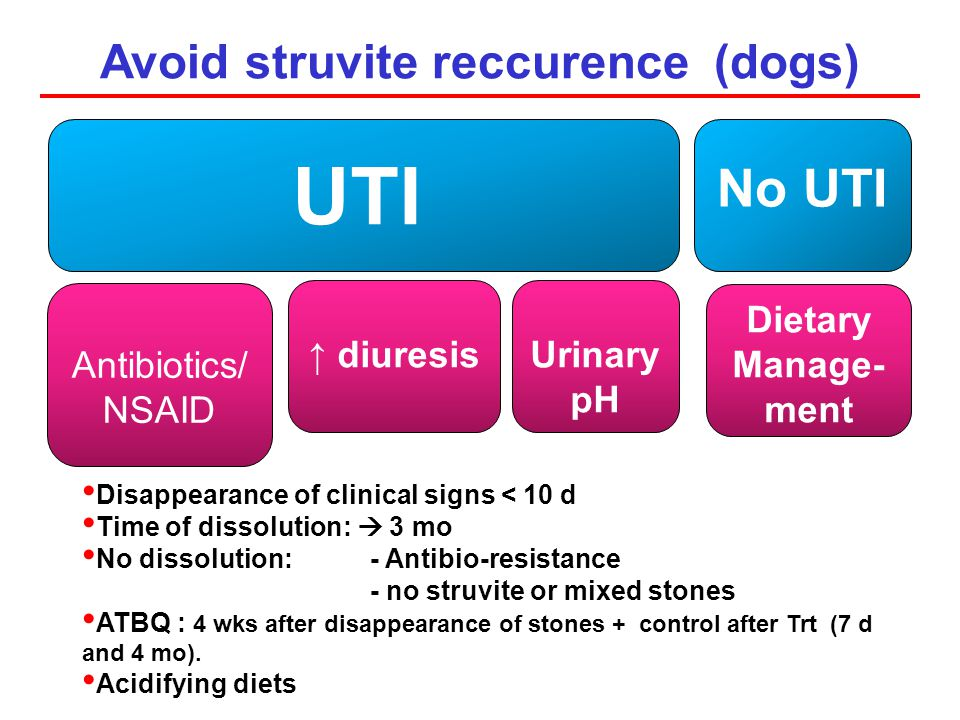 Avoid struvite reccurence (dogs)