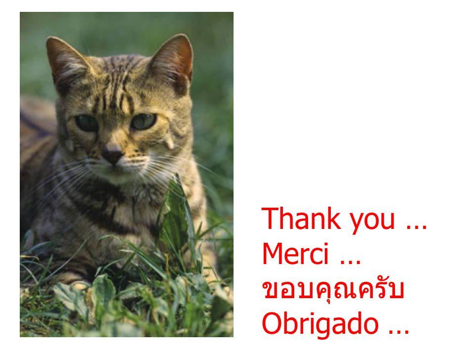 Thank you … Merci … ขอบคุณครับ Obrigado …