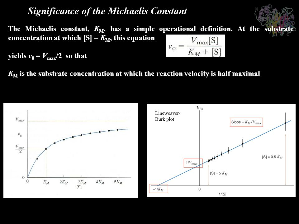 Significance of the Michaelis Constant
