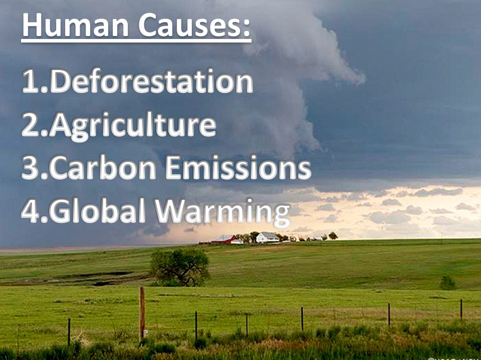 Human Causes: 1.Deforestation 2.Agriculture 3.Carbon Emissions 4.Global Warming