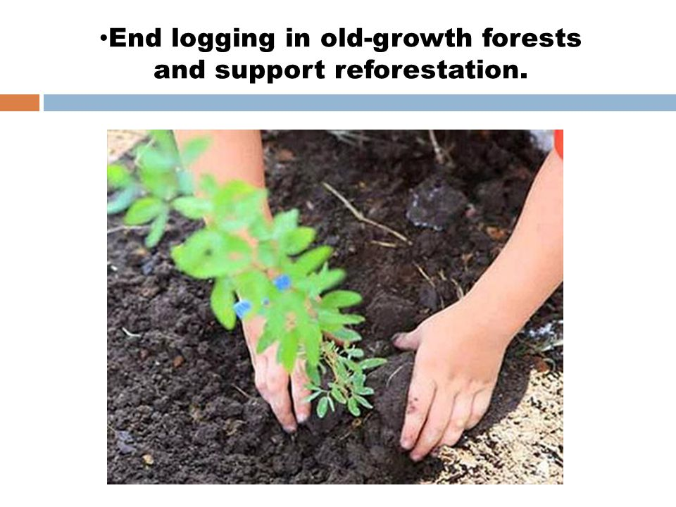 End logging in old-growth forests and support reforestation.