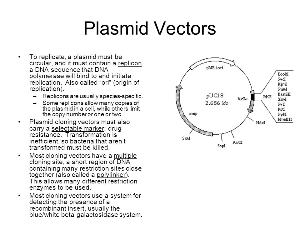 Plasmid Vectors
