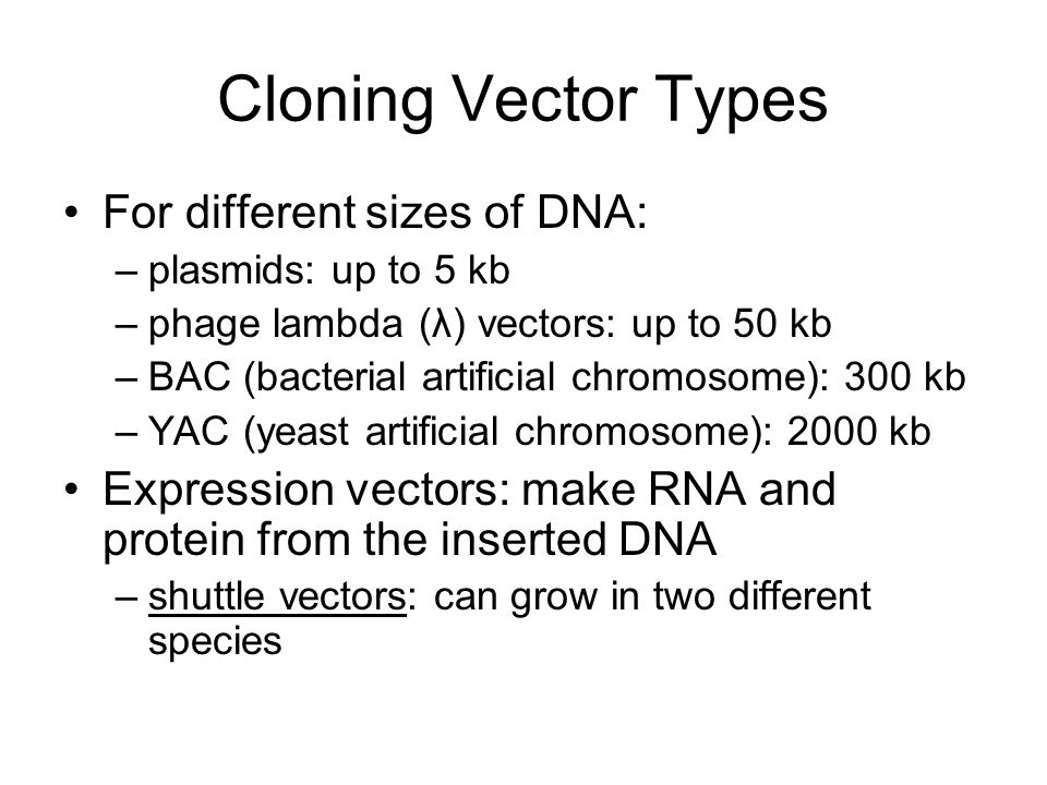 Cloning Vector Types For different sizes of DNA: