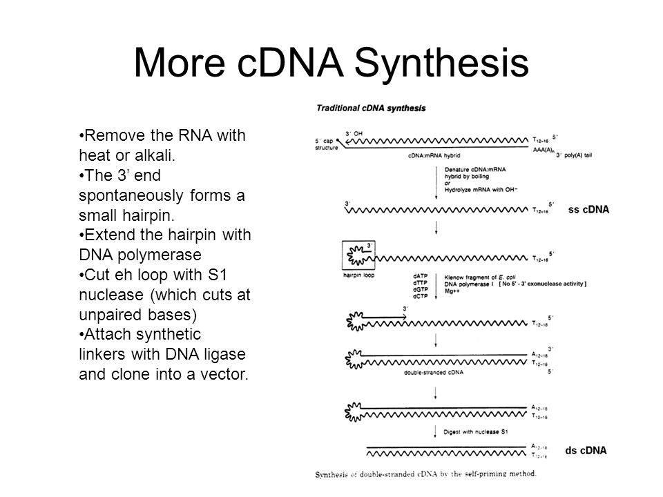 More cDNA Synthesis Remove the RNA with heat or alkali.