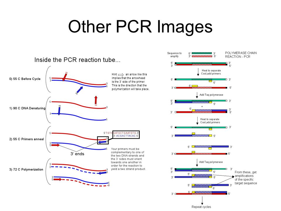 Other PCR Images