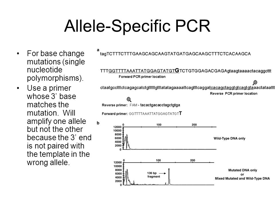 Allele-Specific PCR For base change mutations (single nucleotide polymorphisms).
