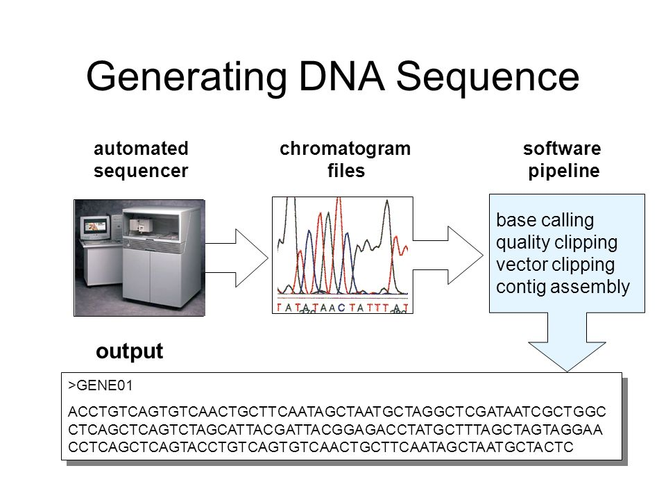 Generating DNA Sequence