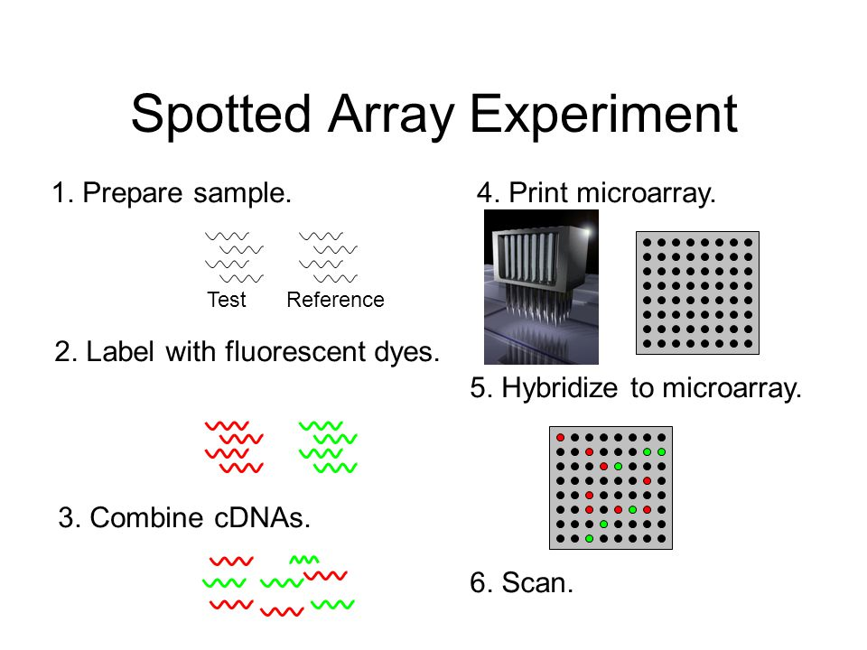 Spotted Array Experiment