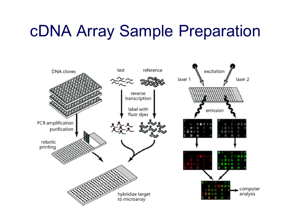 cDNA Array Sample Preparation