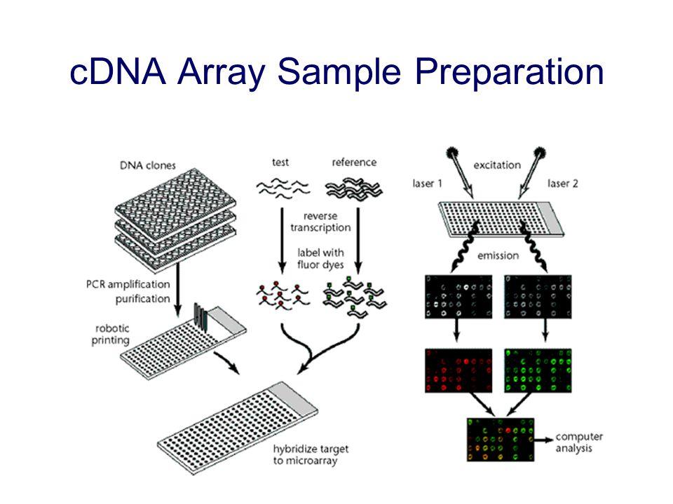 cDNA Array Sample Preparation