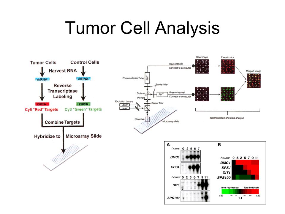 Tumor Cell Analysis