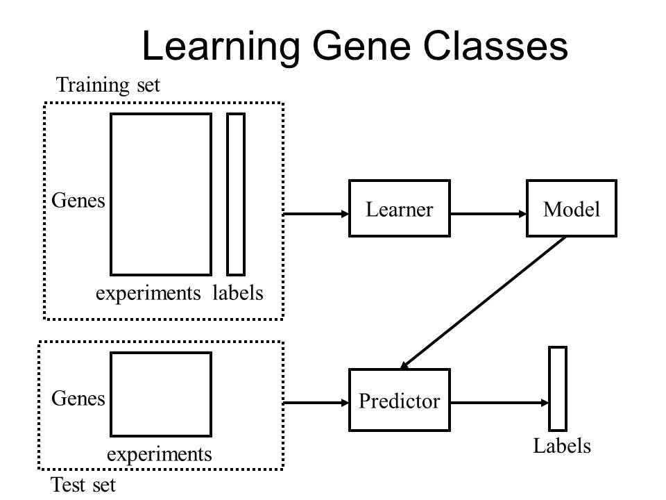 Learning Gene Classes Training set Genes Learner Model experiments