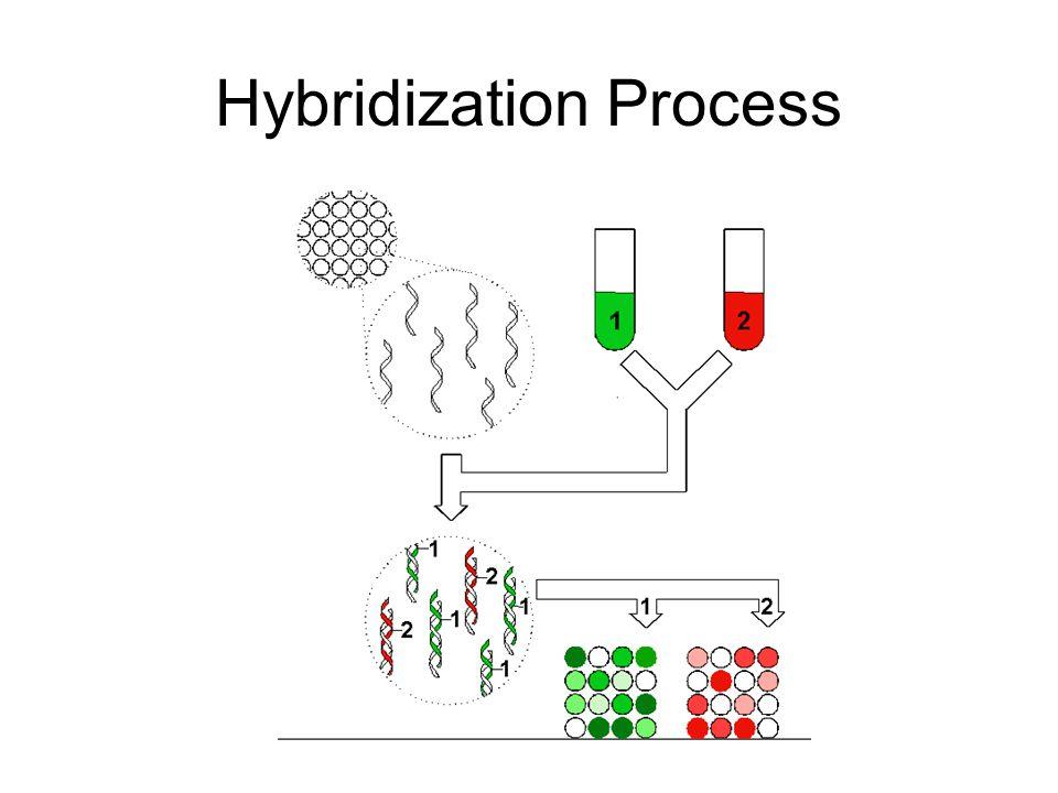 Hybridization Process