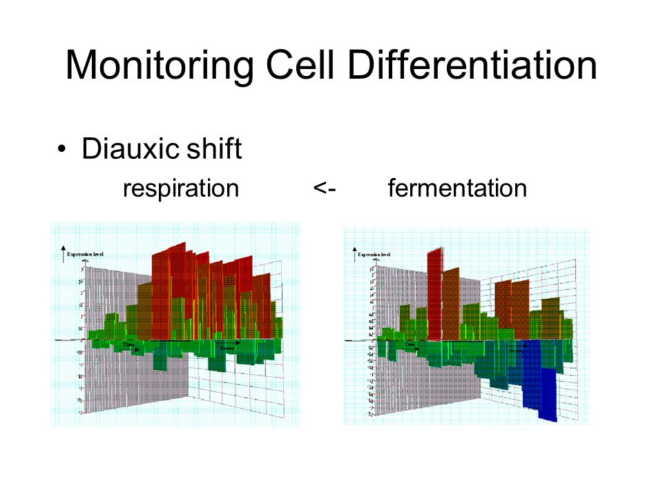Monitoring Cell Differentiation