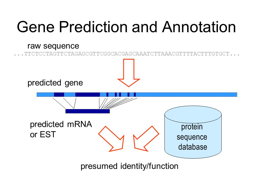 Gene Prediction and Annotation