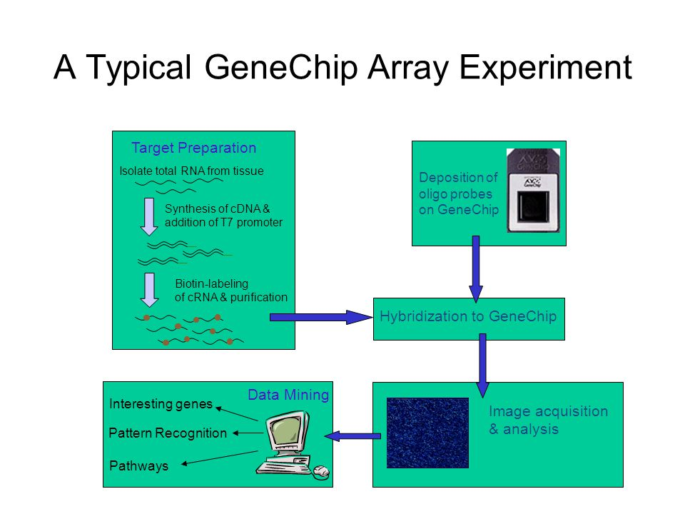 A Typical GeneChip Array Experiment