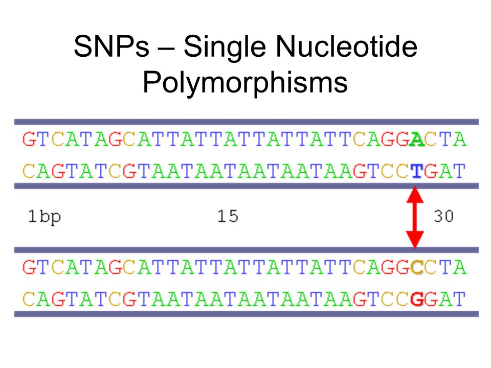 SNPs – Single Nucleotide Polymorphisms